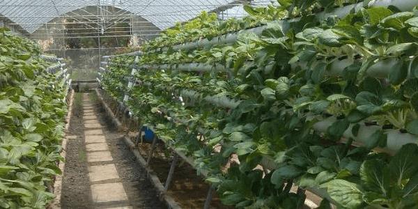 Pertanian Modern Di Indonesia Saat Ini Dan Di Masa Depan1