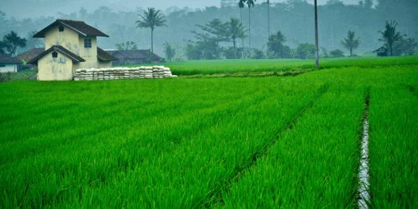 Pertanian Modern Di Indonesia Saat Ini Dan Di Masa Depan2
