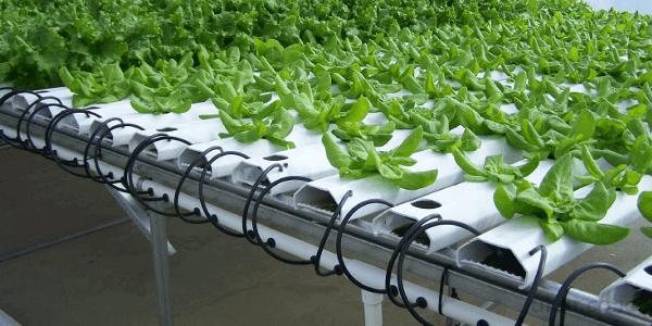 Pertanian Modern Di Indonesia Saat Ini Dan Di Masa Depan3