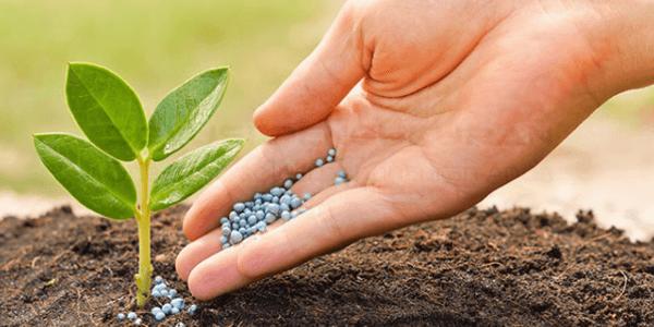 Pertanian Organik Solusi Pertanian Modern5