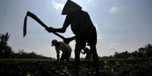 Pertanian Organik Solusi Pertanian Modern6