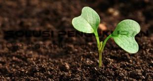 Hubungan PH Tanah Terhadap Kesuburan Tanah
